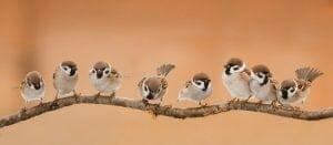 Allontanamento Uccelli A Roma